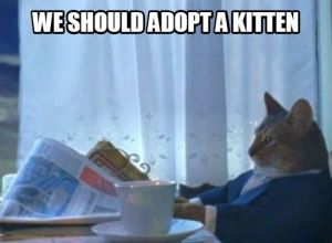 We Should Adopt a Kitten